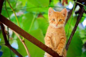 Kitten in Tree