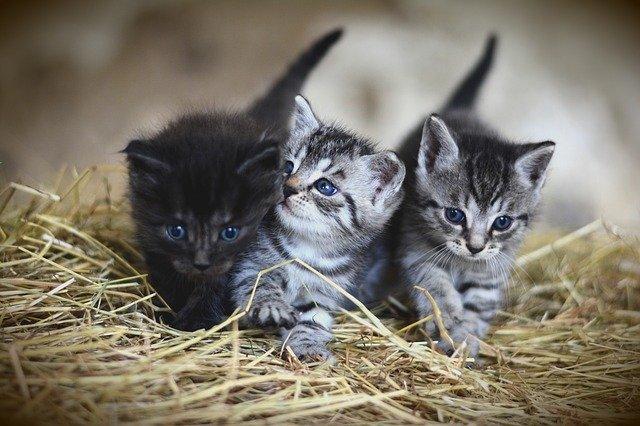 Three kittens cuddling