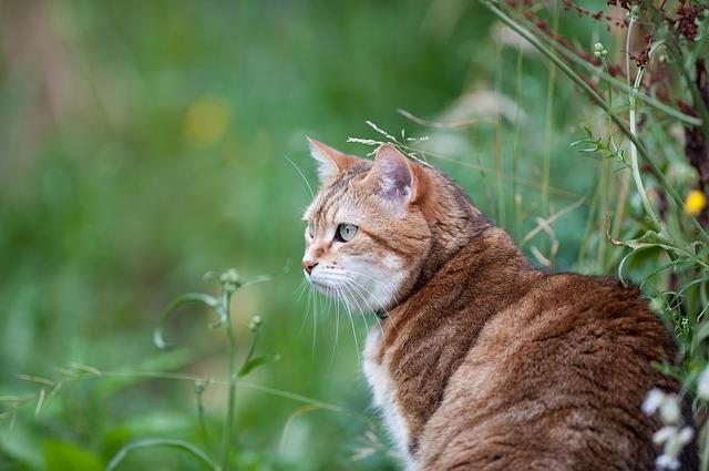 Cat in field