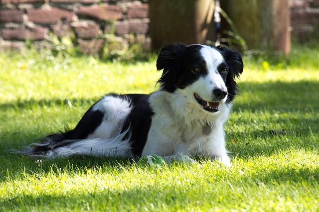 Dog resting in yard