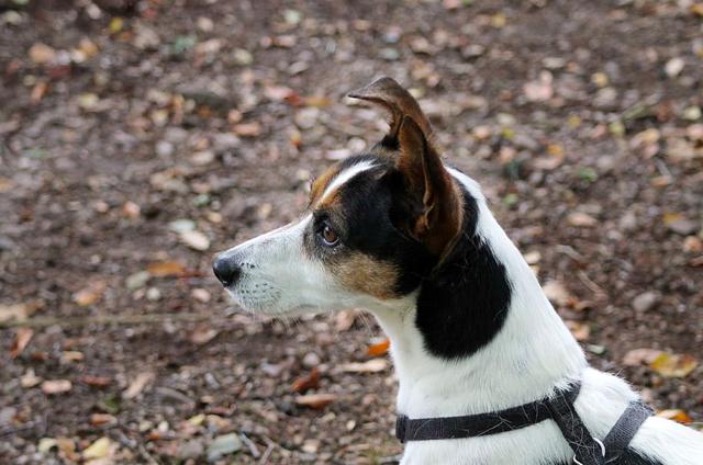 Alert dog waits for command