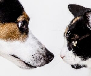 Cat and dog face off