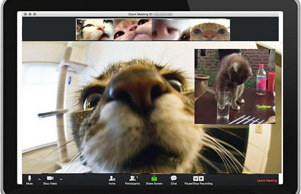 Cats on Zoom screen