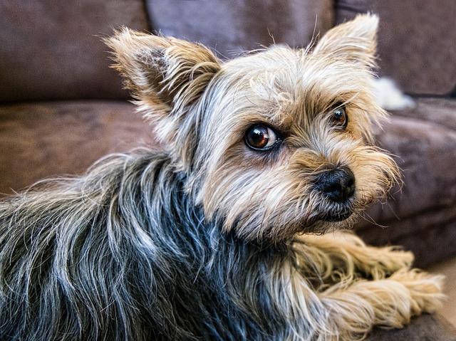 Small dog glances at camera